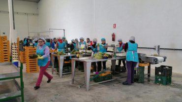 La primera cooperativa agrícola de Fuente Vaqueros ya da trabajo a 35 desempleadas
